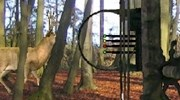 Caccia Al Cervo Con L'arco Anteprima